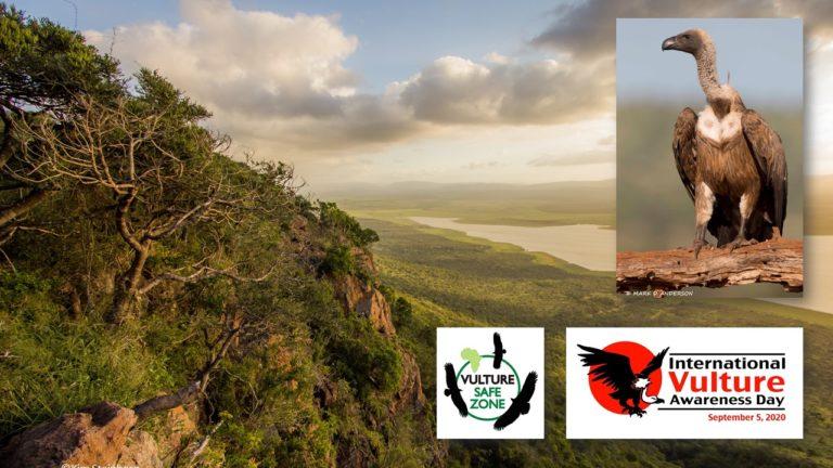 Zululand Zone for Vultures Zone für Geier im Zululand