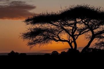 Letaba im Sonnenuntergang