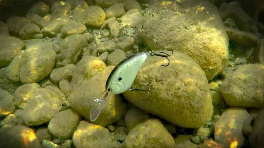 Perfect Deep-Water Bass Fishing Tactics with Deep Diving Crank