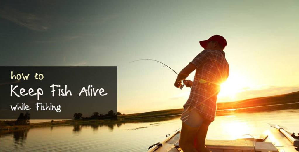 How to Keep Fish Alive While Fishing