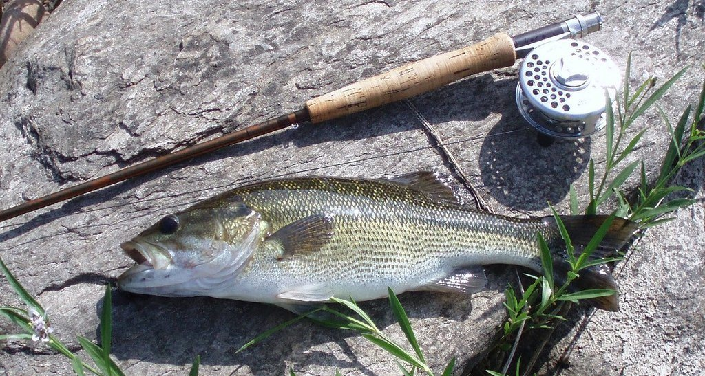 bass fishing equipment tips