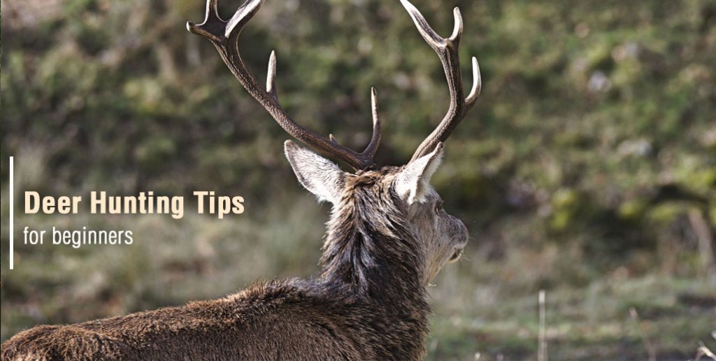 Deer Hunting Tips for Beginners