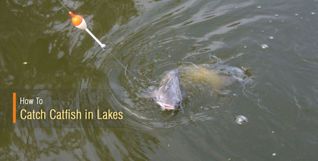 How To Catch Catfish In Lakes