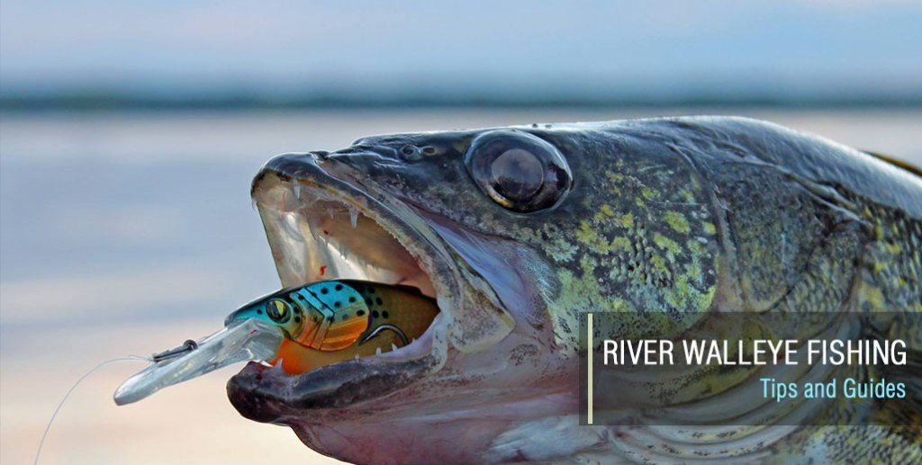 River Walleye Fishing