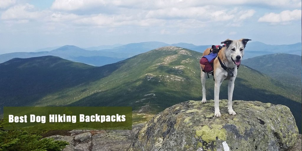 Best Dog Hiking Backpacks Reviews
