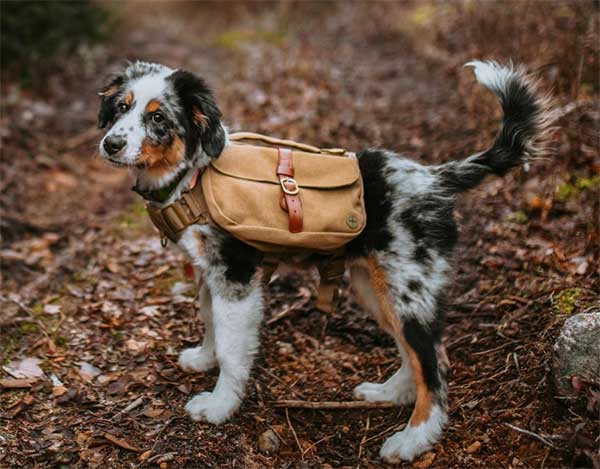 Buying Guide on How to Choose the Best Dog Hiking
