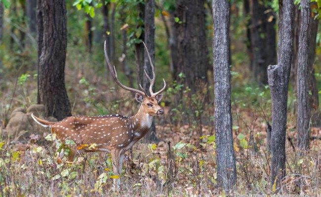Galerie Indien Wildlife Photography By Dietmar Willuhn