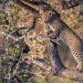 Galerie Südafrika Wildlife Photography By Dietmar Willuhn