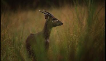 Rubondo National Park