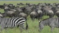 Serengeti Migration 6 Day's 5 Nights Lodge Safari