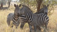 Lodge Safari to Tarangire