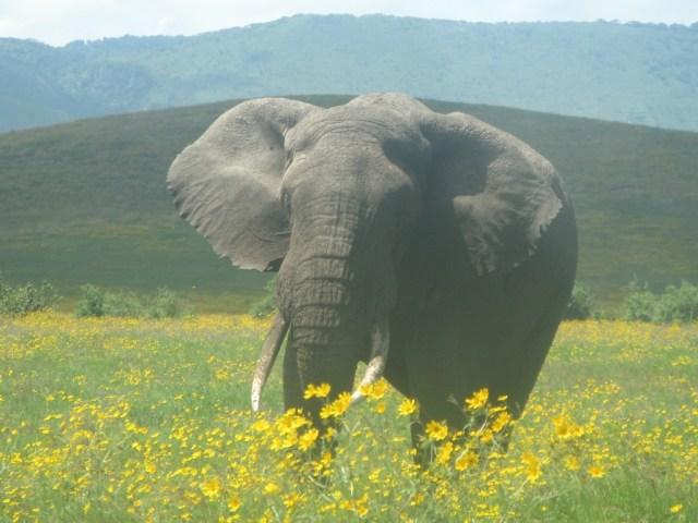 Mwanza-Serengeti
