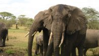 african safari adventures 9 days