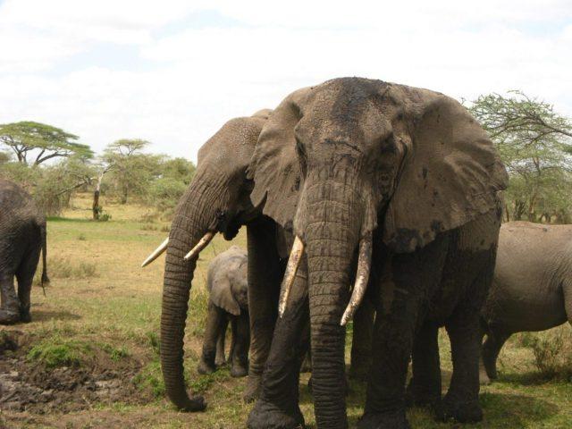 Lodge Safari Serengeti and Ngorongoro Crater