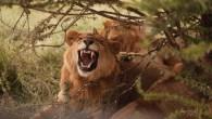 tours serengeti ngorongoro