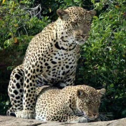 Moru Serengeti