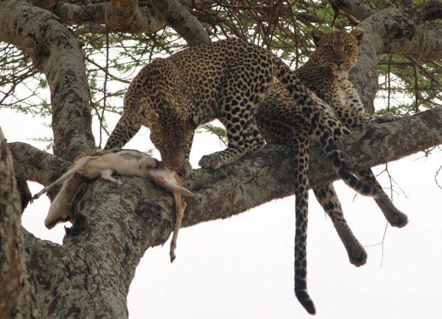 Mwanza Arusha Camping Safari