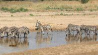 5 Days Serengeti Great Migration