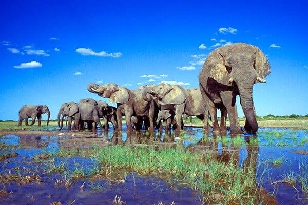 Image result for safari namibia