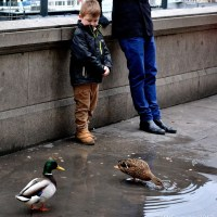 Boy and Ducks