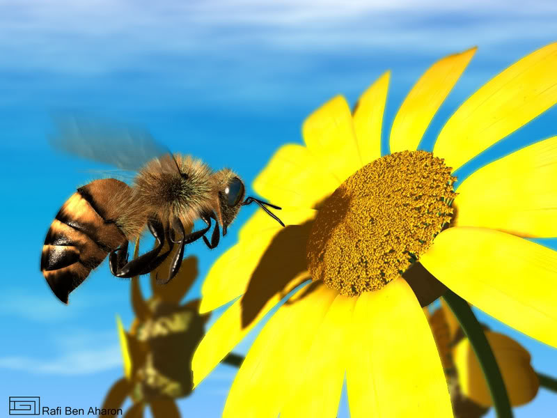 Image result for honeybee pictures