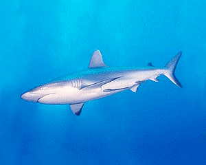 shark conservation images