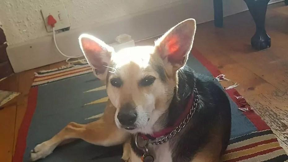 Shiloh in the sunshine