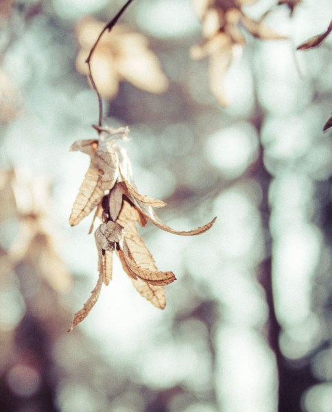 Blatt im Herbst