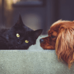 Pets can affect indoor air quality