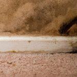 mold on carpet