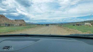 Die Kühe stehen oft mitten auf der Straße