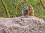 Bitte nicht füttern - Halte Abstand auch zu diesen niedlichen Hörnchen