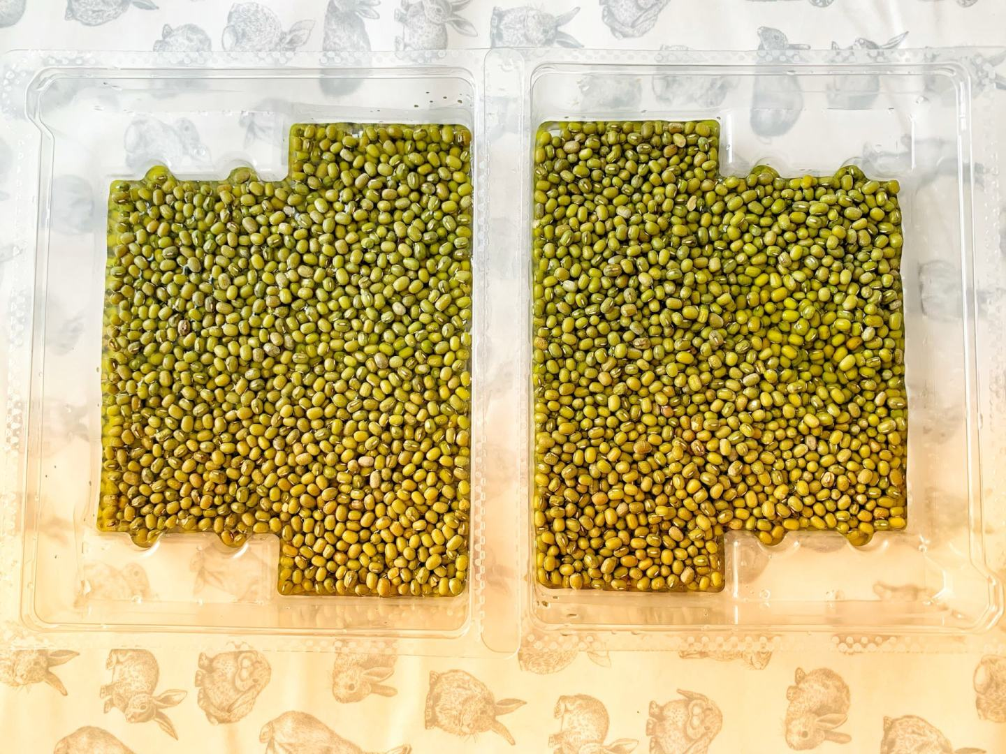 Mung beans in a tray for Persian New Year
