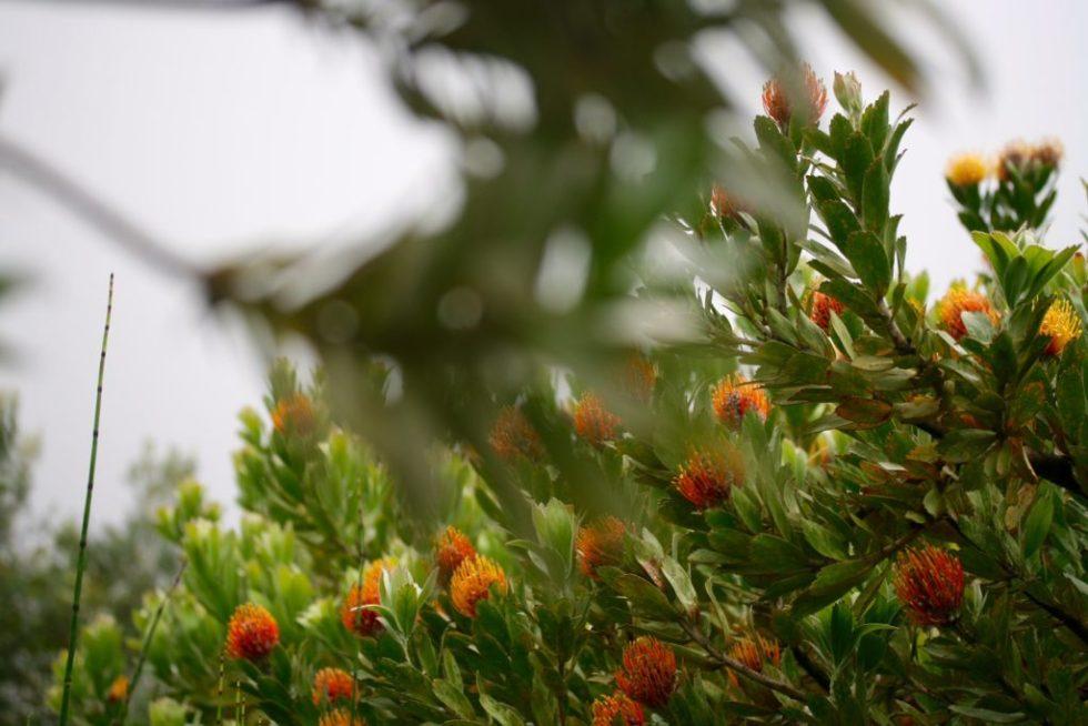 honey trees 2