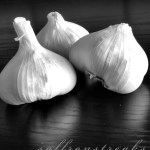 garlic in black and white