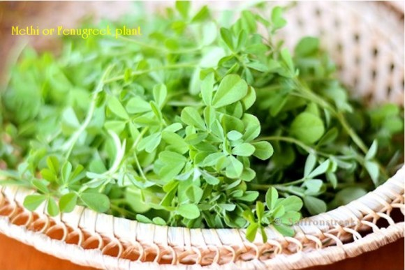 methi harvest