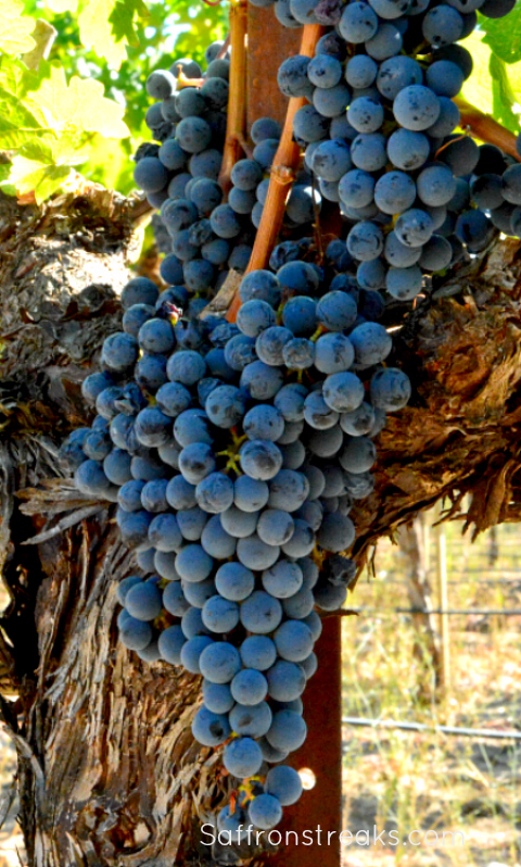 bangalore blue grapes