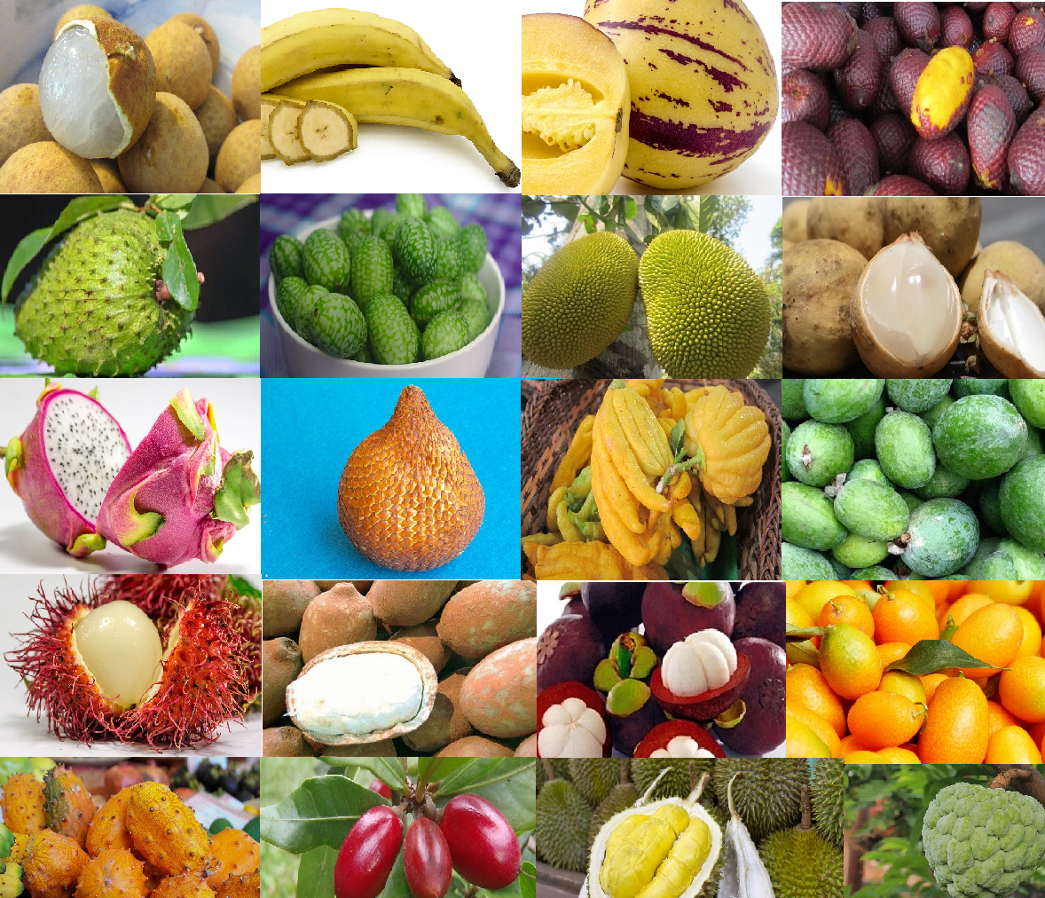 20 Exotic Fruits You Must Try at Least Once - SAFIMEX ...