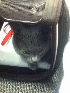 Travelling with Pets to Russia - at the airport