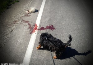 Don't End Up Romantic Roadkill!
