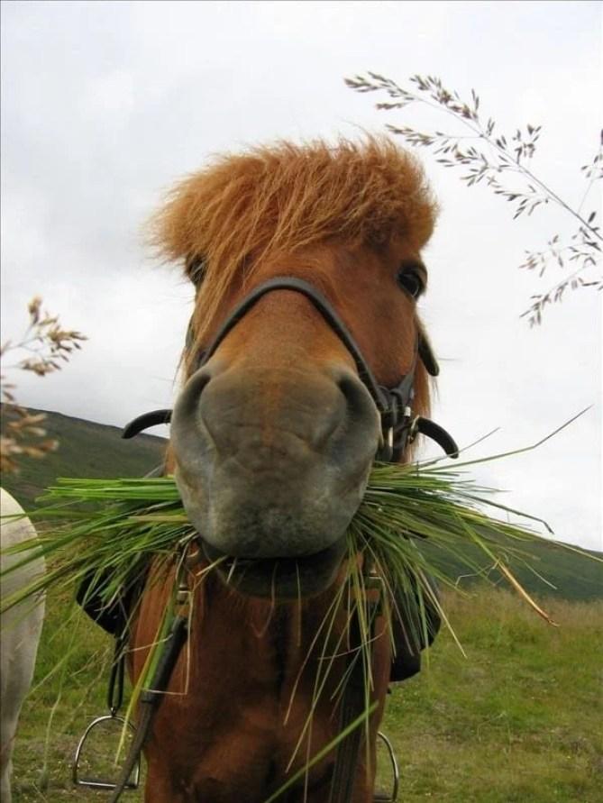 Horse having a bite