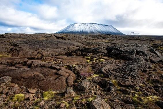 Icelandic Lava, moss and flora in autumn