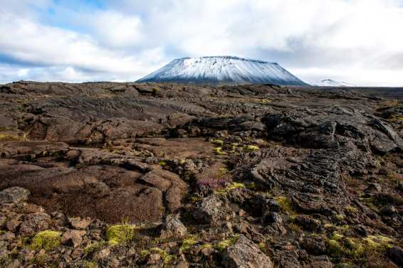 Icelandic Lava, moss and flora in autumn