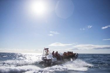 RIB - Whale Safari