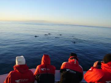 Whale Watching Iceland Dolphins Passengers
