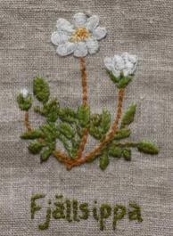 Fjällsippa Fjällsippa (Dryas octopetala), Lapplands landskapsblomma, är en dvärgbuske som växer i stora mattor på låg- till mellanalpin nivå. Kalkrik mark, hedar, grässluttningar, klippbranter, rasmarker. Blad 1-3 cm långa, vintergröna. Vit blomma med 8 kronblad.
