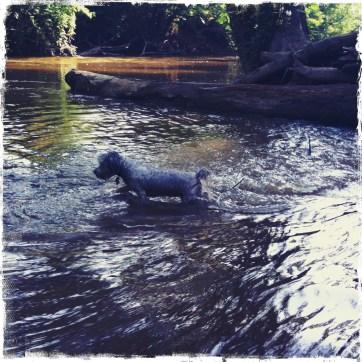 Gettin' in the Water