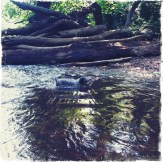 Little Dogs CAN Swim