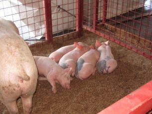 State Fair 2011 - 12