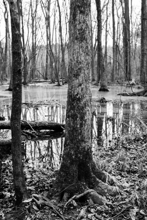 the wetlands (10 of 21)